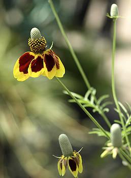 Perky Yellow by Barbara Middleton