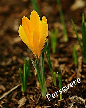 Persevere  by Marilyn Peterson