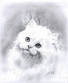 Persian Cat by Sandra Phryce-Jones