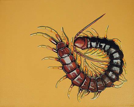 Peruvian Centipede by Jude Labuszewski