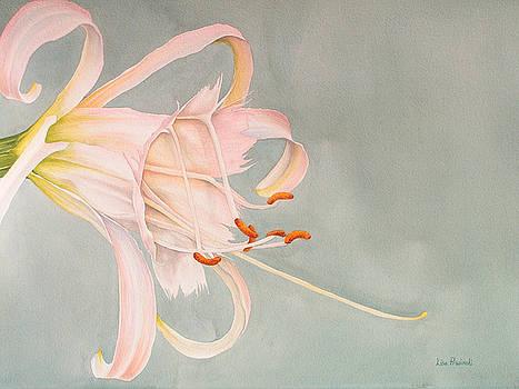 Peruvian Daffodil by Lisa Prusinski