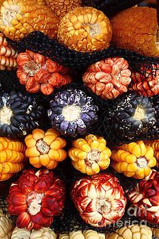 James Brunker - Peruvian Maize Varieties
