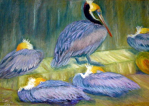 Peruvian Pelicans Two Pastel by Antonia Citrino