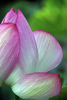 Carolyn Stagger Cokley - petal puzzle