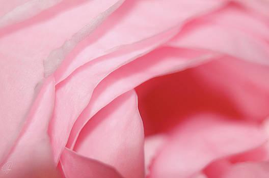 Petals by Margaret Hormann Bfa