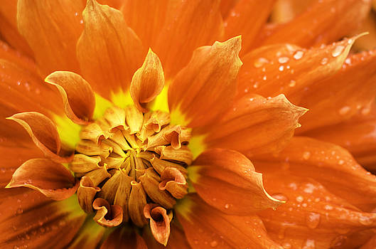 Petals of Fire by Rod Sterling