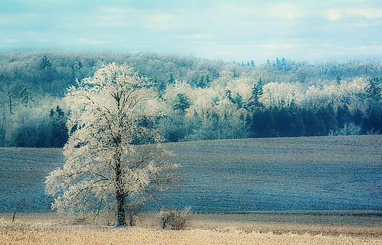 Petersburg Fields by Karl Anderson