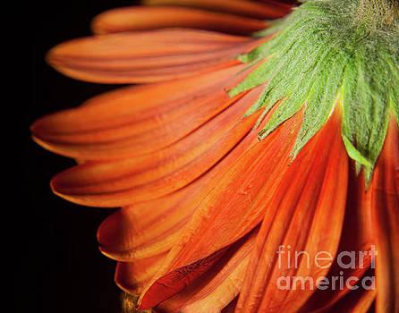 Petite Petals Nature Photograph by Melissa Fague
