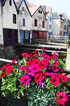 Petunias of Amiens by Therese Alcorn