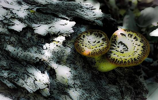 Pheasant Back Wild Mushroom by Karl Anderson