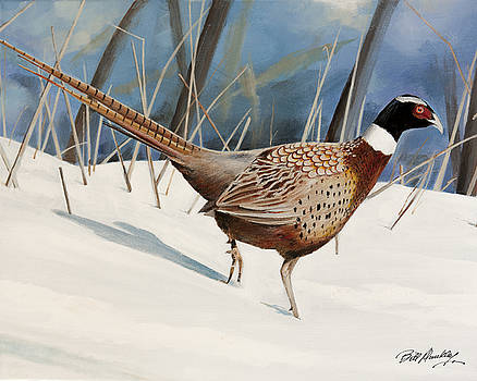 Pheasant in Snow by Bill Dunkley