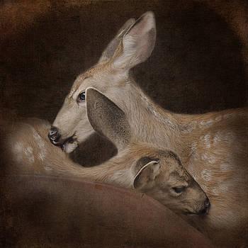 Phileo by Sally Banfill