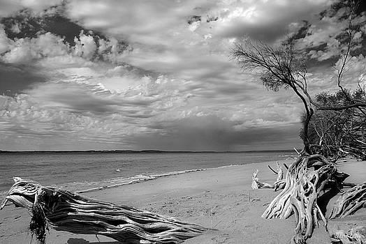 Robert Lacy - Phillip Island Driftwood