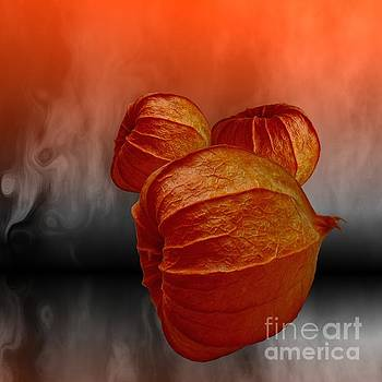 Physalis Fire by Issabild -