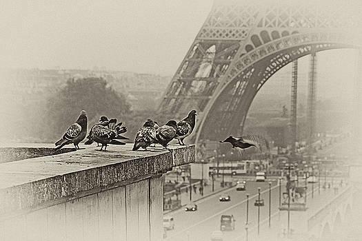 Pigeons of Paris by Claudia Moeckel