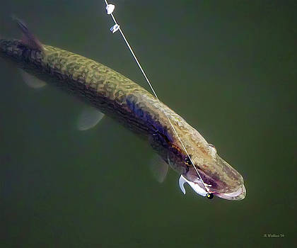 Pike by Brian Wallace