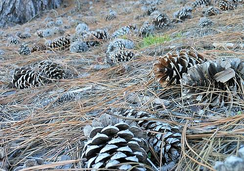 Pine Cones by Kay Gilley