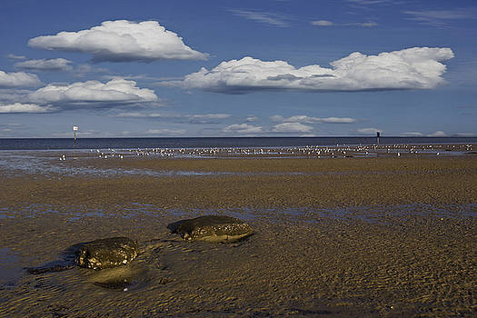 Pine Island Beach by Regina Williams
