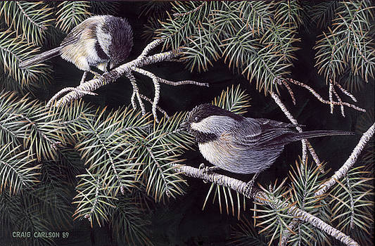Pine Retreat - Black Capped Chickadees by Craig Carlson