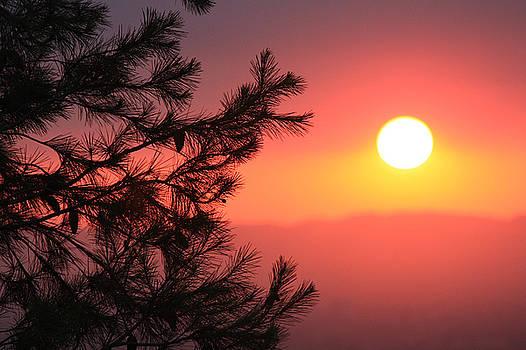 Pine Sunset by Sarah Vandenbusch