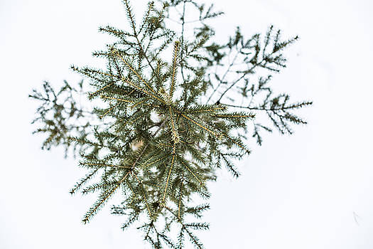 Pine Tree Snowflake by Brent Paape