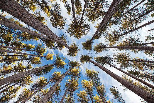 Adam Pender - Pine Tree Vertigo