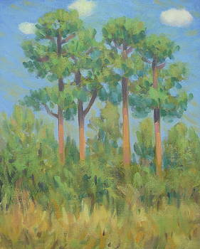 Pine Trees in Meyer Park by Texas Tim Webb