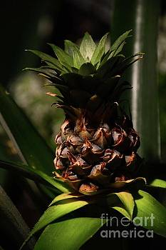 Pineapple by Cindy Manero
