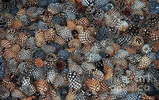 Pinecones by Elaine Manley