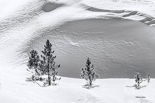Pines in Snow Drifts Black and White by Stephen Johnson