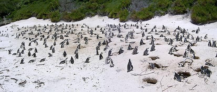 Pinguin matters by Alessia Orlandi
