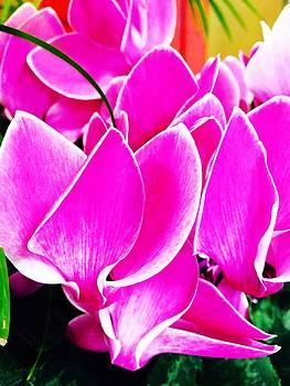 Pink 1 by Vijay Sharon Govender