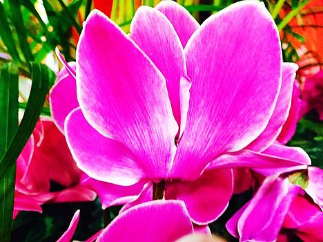 Pink 2 by Vijay Sharon Govender