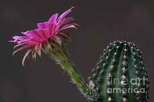 Pink and Green Flatty Cake by Bryan Keil