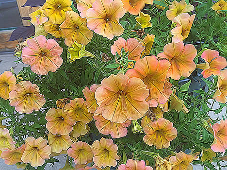 Cindy Boyd - Pink And Yellow Petunias