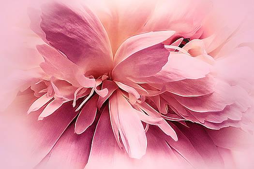 Pink Ballet Powder Puff by Darlene Kwiatkowski