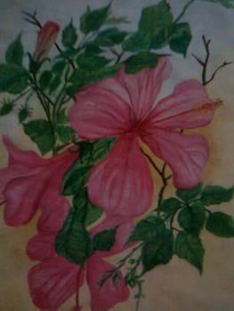 Pink Blooms by Seema Sharma
