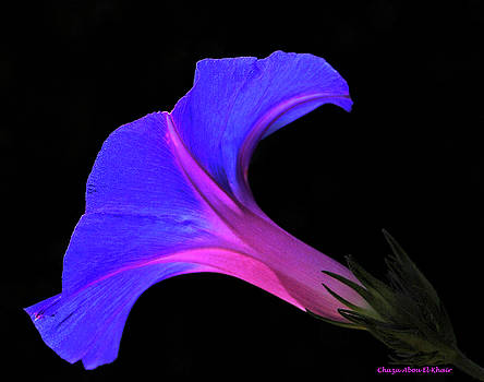 Pink blue flower by Chaza Abou El Khair