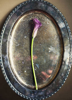 Pink Calla Lily on Vintage Tray by Di Kerpan