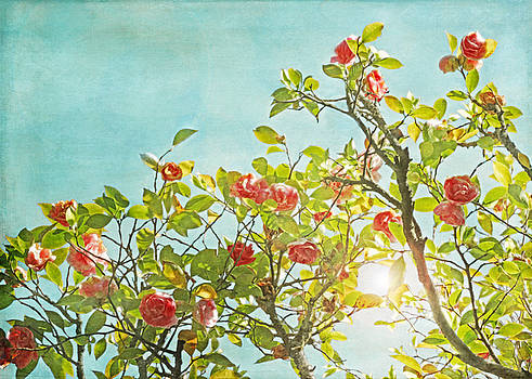 Pink Camellia japonica Blossoms and Sun in Blue Sky by Brooke Ryan