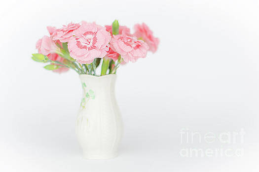 Steve Purnell - Pink Carnations 3