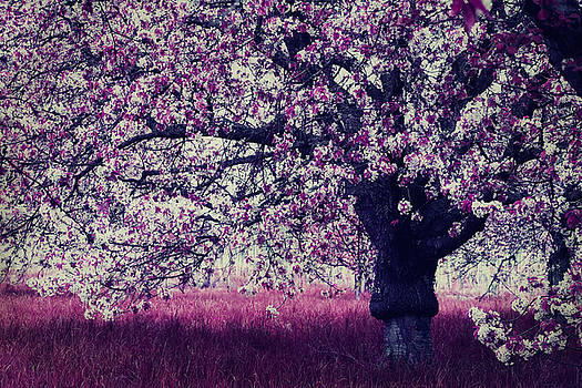 Pink Cherry Blossom by Claudia Moeckel