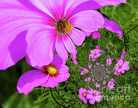 Pink Cosmos Flowers Abstract by Smilin Eyes  Treasures
