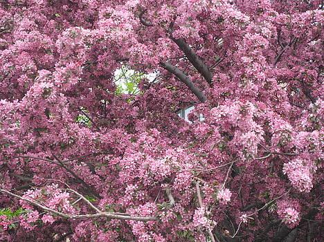 Pink Crab Apple Tree by Renee Antos