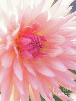 Pink Delight by Kim Andelkovic