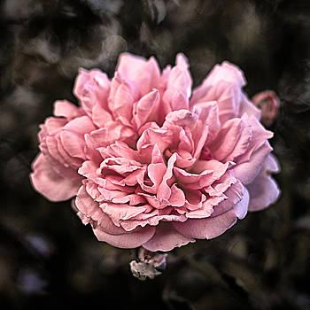 Pink Explosion by Scott  Wyatt