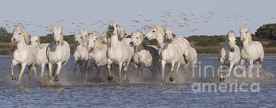 Pink Flamingoes and White Horses by Carol Walker