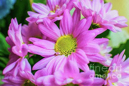 Adrian Evans - Pink Flowers