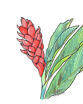 Pink Ginger by Diane Thornton