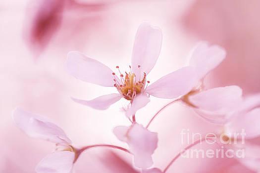 LHJB Photography - Pink Grace....